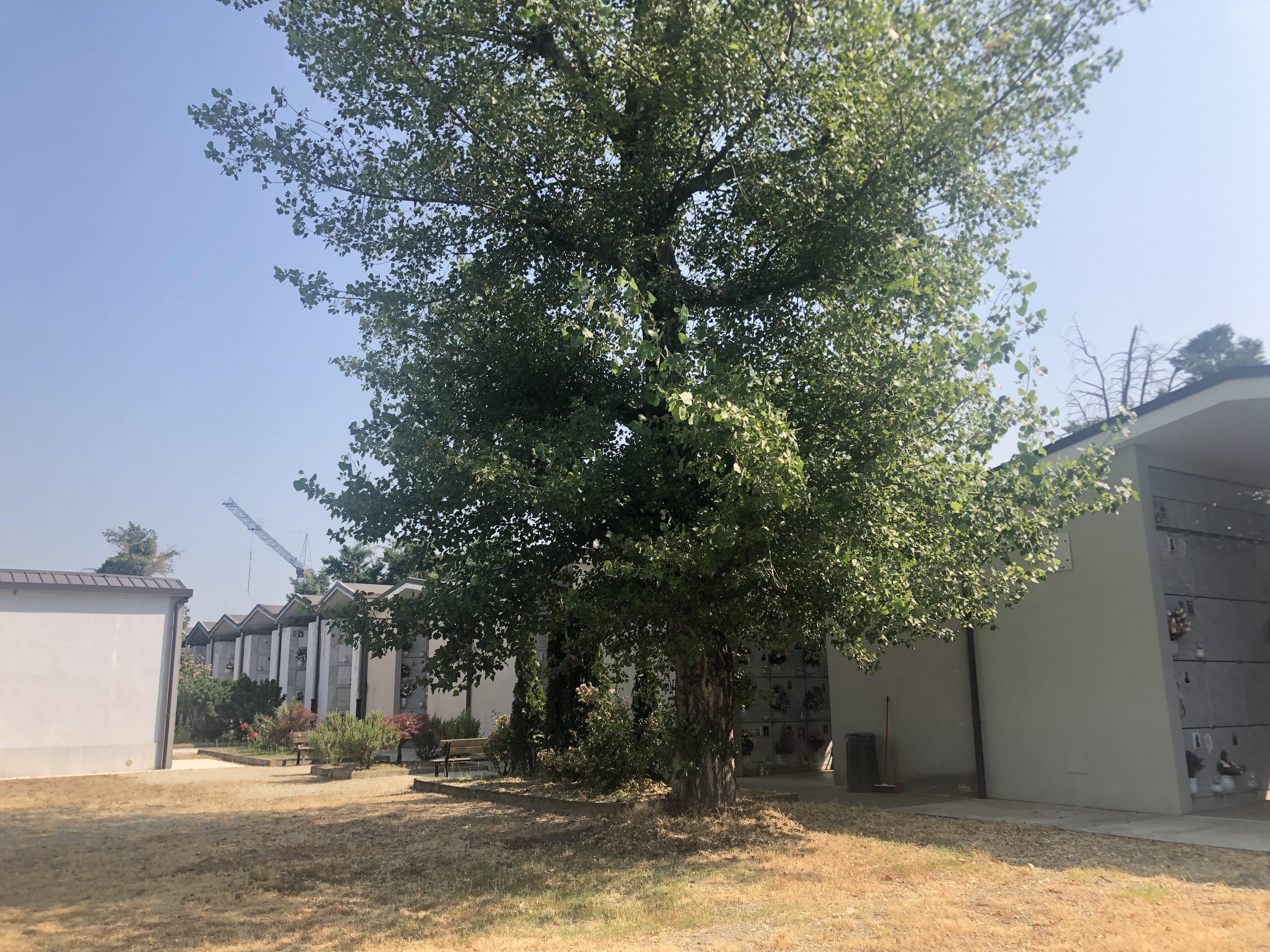 albero e ossario